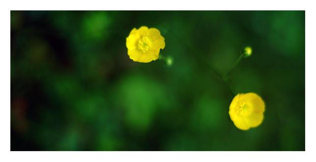 flower II by murita