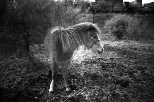 It's Actually A Pony