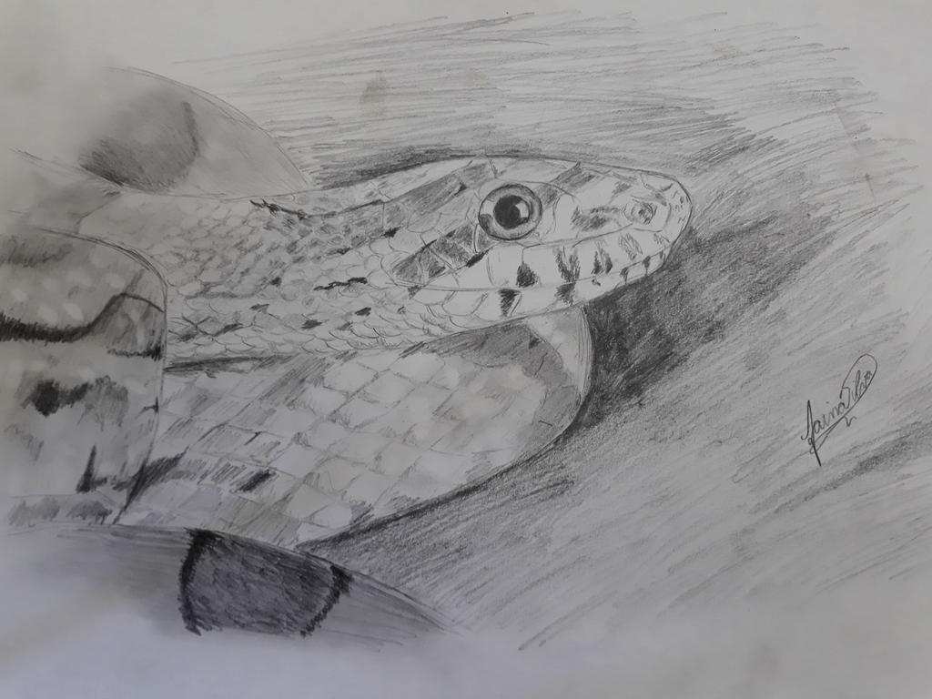 Corn Snake by Taina-dOS