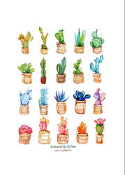 Colourful cactuses