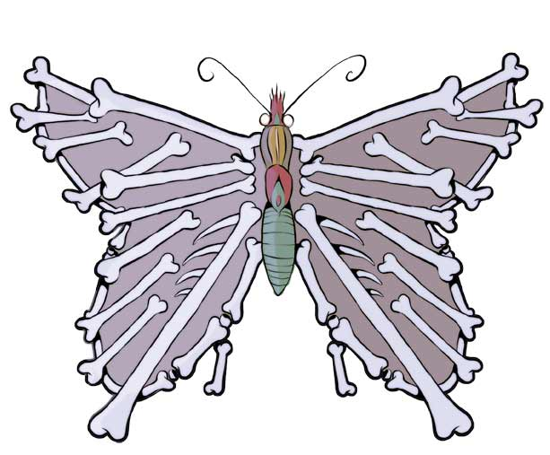 Anatomy of a butterfly by Fenster on DeviantArt
