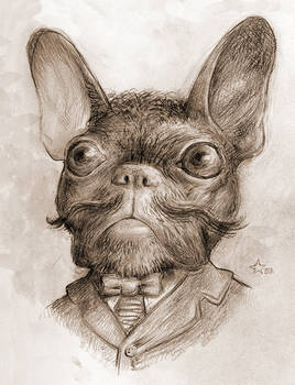 Gentleman French Bulldog