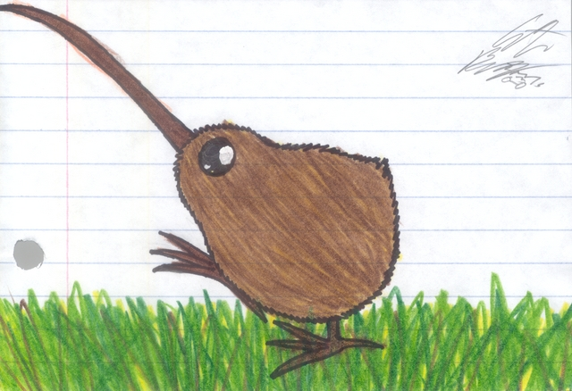 Year 4 Nz Native Kiwi Bird Drawing By Christina Maassen Kiwi Bird