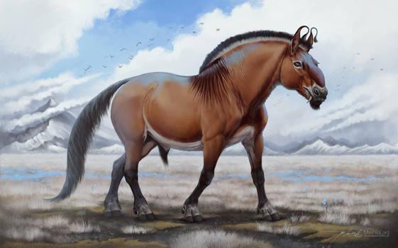 Equus Ferus Papaveratum
