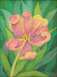 Tulip by Coccis