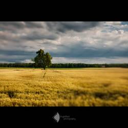 Hay Field by BrightRedFox