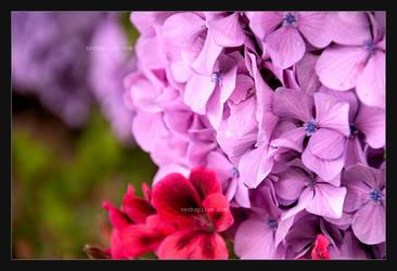 Purple Light by BrightRedFox