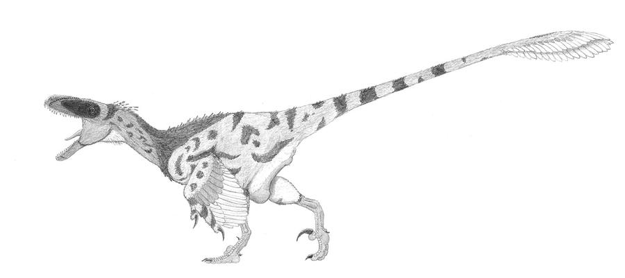 Image Result For Coloring Pages Dinosaurs