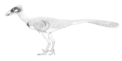 An Inquisitive Saurornithoid