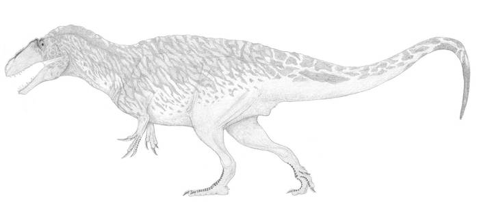 A Well-Muscled Acrocanthosaur