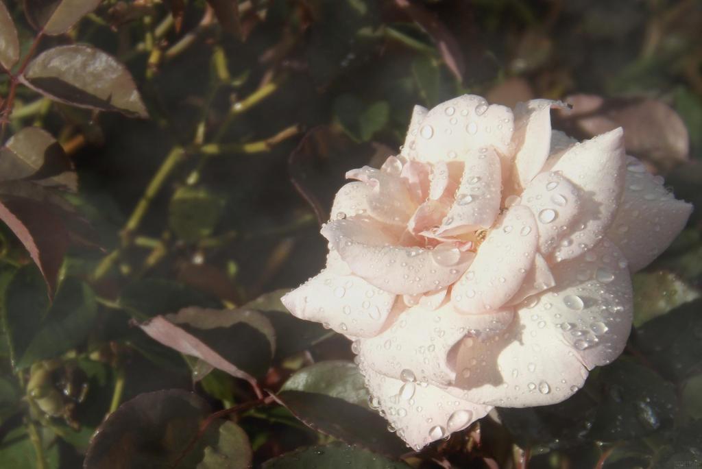 Eternal Flowerchild II by brunaschneemann