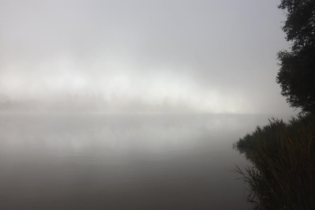 Fog is the refuge of the misanthropic