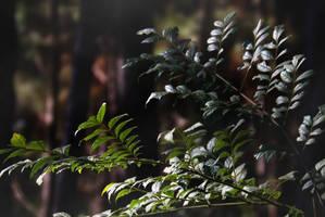 The leaves that resist wind by brunaschneemann