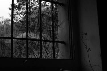 Window by brainy-specs