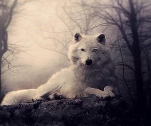 createdwolf23456789's Profile Picture