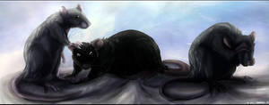 _rats_ by Tai-L-RodRigueZ