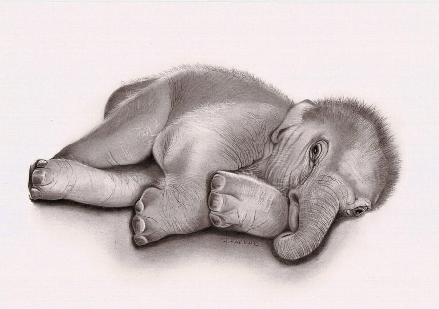 Pencil Drawings Of Elephants Tumblr Elephant Pencil Drawing