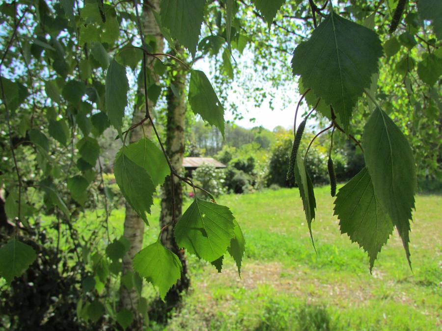 Falling Leaves by Arcadiaelfe