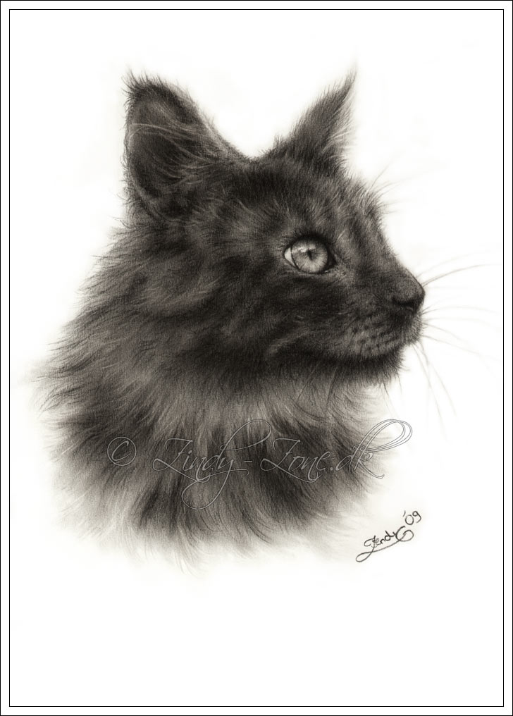 Maine Coon Igor by Zindy