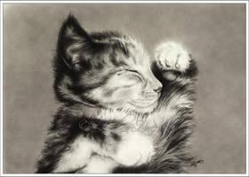 Sweet Dreams Little Kitten