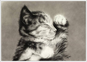 Sweet Dreams Little Kitten by Zindy