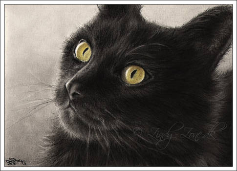 Selina Black Cat