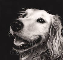 Happy Golden Retriever Drawing Zindy Ink by Zindy