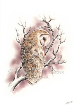 The branch and the owl