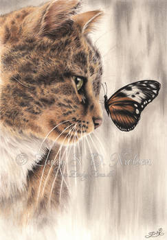 Sweet Harmony - Cat and Butterfly