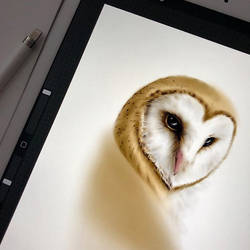 Owl in the making