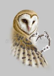Barn Owl - Protector of the heart