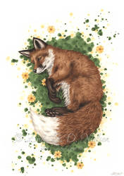 Summers Peace Fox