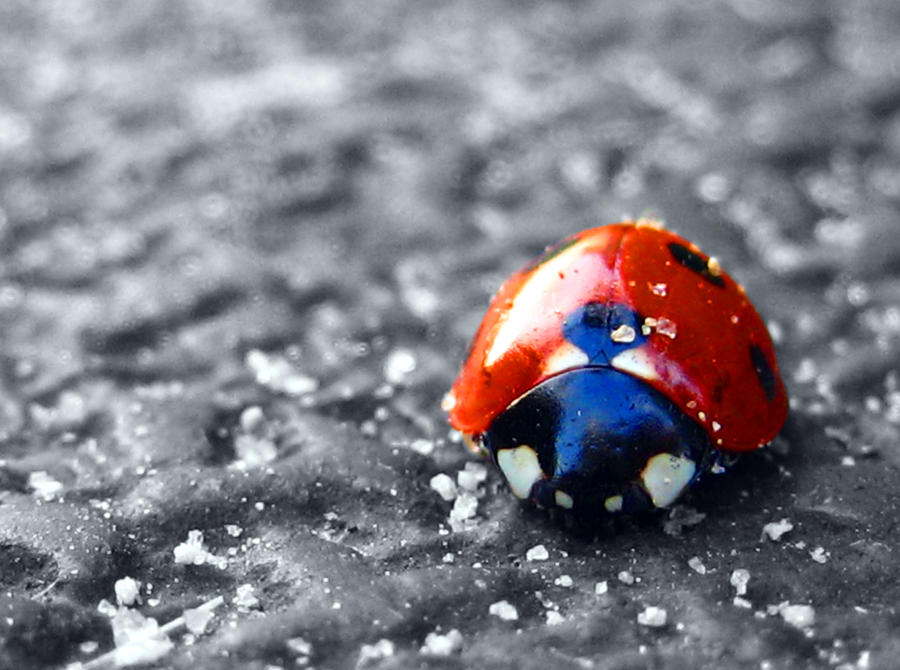 Ladybug by myntaphoto