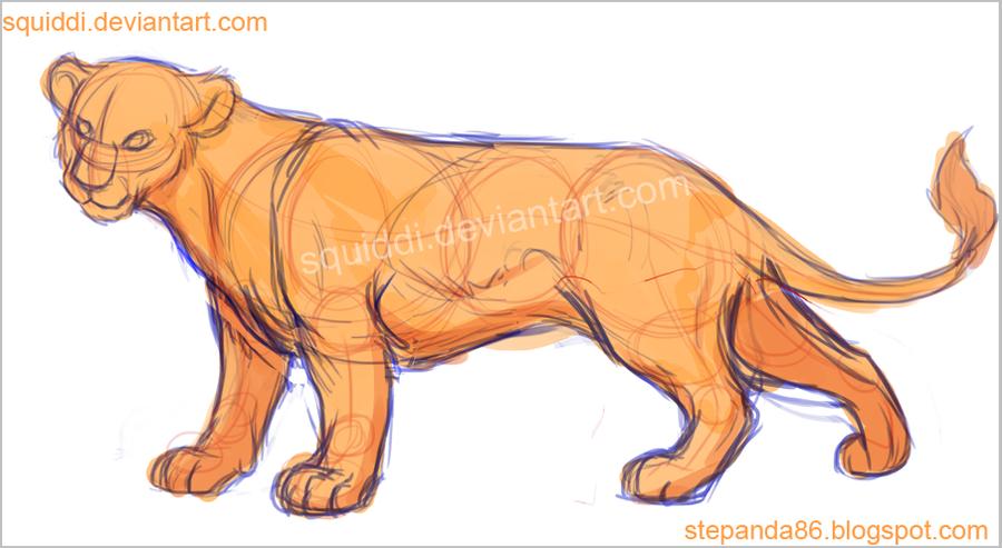 Lion Anatomy By Stepandy On Deviantart