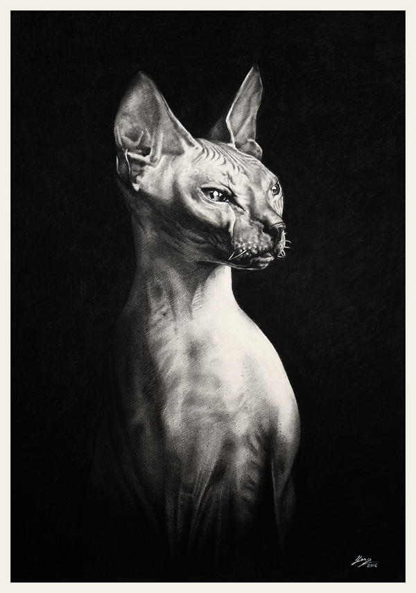 Cat S Meow Leith Walk