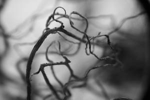 Roots by Mon-artefact