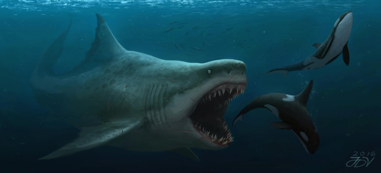 Top Megalodon Shark Comparison Wallpapers