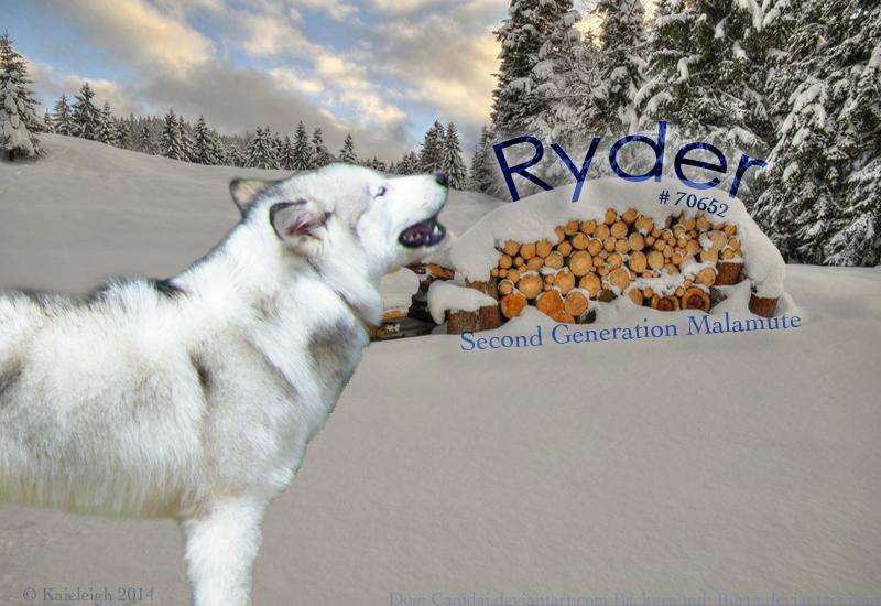 Ryder Canine Custom by Kaieleigh