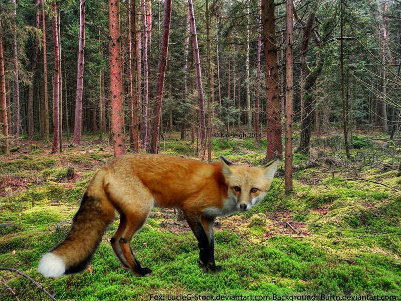 Fox Custom 1 by Kaieleigh