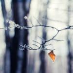 ...winter -1-... by OlegBreslavtsev