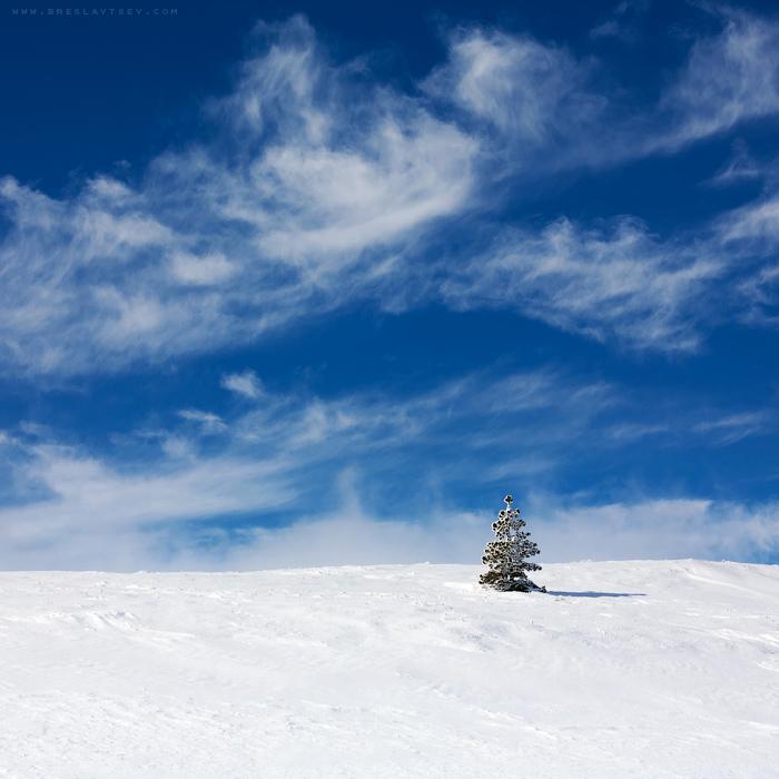...winter tree -3-... by OlegBreslavtsev