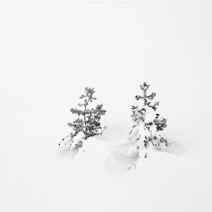 ...snow cover... by OlegBreslavtsev