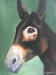 Portrait of Raven - Antigua's Donkey Sanctuary  by Cwmm