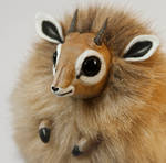 Dik-Dik Furry Creature