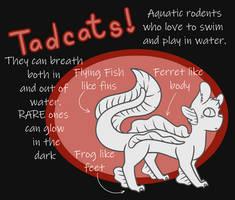 Tadcats!! A Closed Species