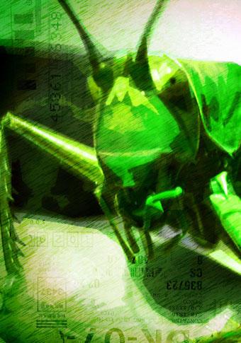 grasshopper83's Profile Picture