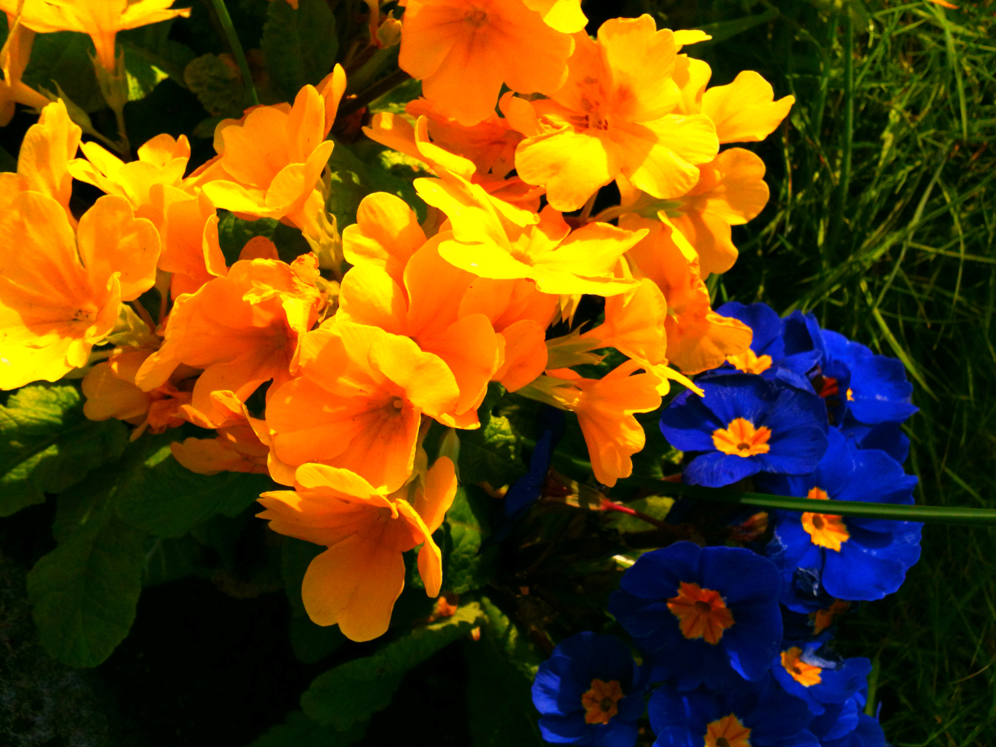 Blue And Yellow Flowers By Artisticanna12 On Deviantart