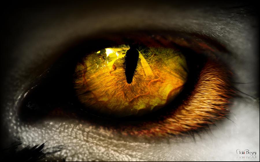 Cat Eye Photography De