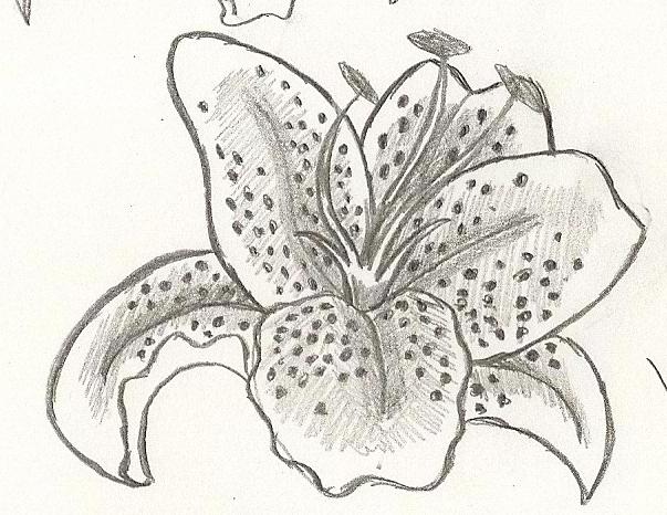 Stargazer Lily Sketch By Devil Dan On Deviantart