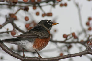 Song of Winter by teresa-lynn